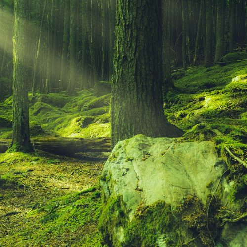 forest-5057220_1920
